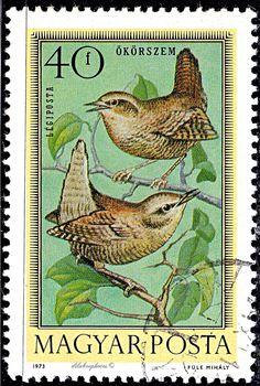 Hungary.  SINGING BIRDS.  EUROPEAN WREN.  Issued 1973 April 16, 40. Scott C337 AP87 . /ldb.