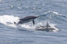 Delfine in Marsa Alam Aegypten