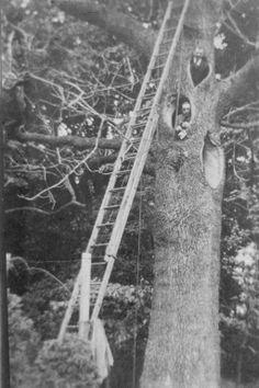 Arborists in jackets and ties repairing a tree circa 1925 (via Longwood Gardens)