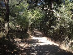Super hilly trail runs