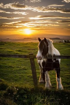Horse on Beacon Hill by Tom Pitman