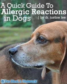 @D R. Justine Lee Pet Health Network #PETS Check out this awesome blog by Dr. Justine Lee about #allergic reactions in #dogs!
