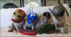 These Avengers. | The 31 Most Important Pugs Of 2013