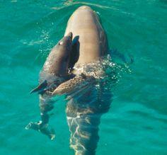 mama dolphin and baby dolphin