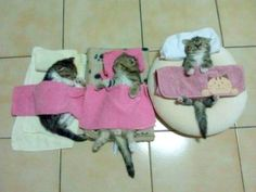 kitty beds <3