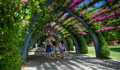 The Arbour | Visit South Bank