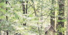 """Máme rádi procházky, máme rádi """"náš les"""". A rozhodně máme rádi knížky. A tak jsme si vytvořili další cíl procházek: https://www.facebook.com..."""