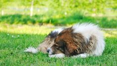 Your Senior Dog – How to Keep an Old Friend Happy and Healthy