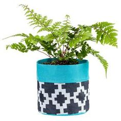 Kmart planter Pouch Sml B gardeners Choice Black And White Design, Black Spot, Boutiques Australia, Organised Housewife, Triangle Design, New Leaf, Mother Day Gifts, Outdoor Gardens, Planter Pots
