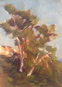 Eucalyptus II, 5x7, oil on panel, original oil painting by Mandy Main