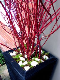 Gold & Red Dogwood : Decorative Branches & Dried Flowers : Departments : Green Floral Crafts