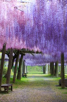 Kawachi Fuji Garden, Kitakyushu, Japan |26 Real Places That Look Like They've Been Taken Out Of Fairy Tales