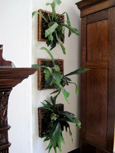 50 Favourite Vertical Garden Design Ideas And Remodel - Home/Decor/Diy/Design Indoor Ivy, Indoor Plants, Air Plants, Vertical Garden Design, Vertical Gardens, Household Plants, Leafy Plants, Decoration Plante, Deco Originale
