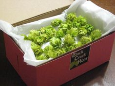 Do it Yourself - Boutonniere Hops for Weddings - 50 Dried Hops Flowers. $7.00, via Etsy.