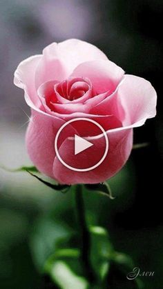 Garden Paths, Garden Landscaping, Wallpaper Backgrounds, Garden Design, Landscape, Rose, Flowers, Plants, Front Yard Landscaping