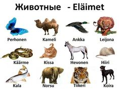 Финский язык Finnish Words, Finnish Language, Language Study, Fun Facts, Learning, Languages, Animals, Literatura, Finland