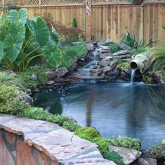 Backyard makeover includes new path, pergola, and pond - Sunset.com