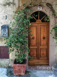 Door in Tuscany Italy with ivy archway.