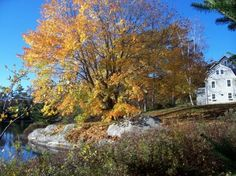 View of the house in the fall