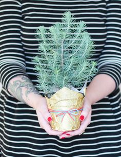 I offer you a mini pine tree.  #thehands #offering_hands #sacred_offering