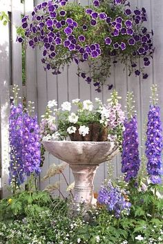 Delphiniums and petunias on a white fence