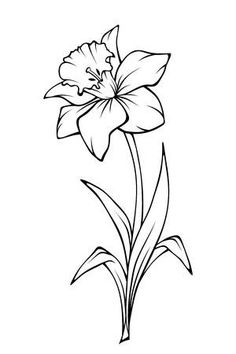 Stock Vector - Narcissus flower isolated on white. Vector black and white line . - Stock Vector – Narcissus flower isolated on white. Vector black and white line art illustration. Flower Line Drawings, Flower Sketches, Pencil Art Drawings, Easy Drawings, Line Art Flowers, Flower Art Drawing, Narcissus Flower Tattoos, Daffodil Tattoo, Birth Flower Tattoos