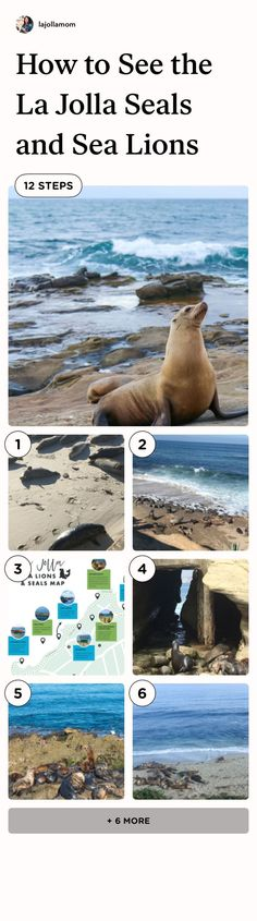 Everything to know about how to see the La Jolla seals and sea lions including a map, six popular beach viewpoints, parking, and other tips from a local. San Diego Vacation, San Diego Travel, La Jolla Seals, Stuff To Do, Things To Do, Sea Lions, Travel Expert, California Travel, Beach Fun