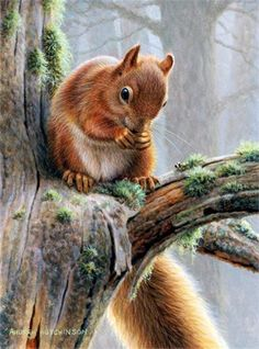 Painting by British Wildlife artist and naturalist Andrew Hutchinson . - Painting by British Wildlife artist and naturalist Andrew Hutchinson - Wildlife Paintings, Wildlife Art, Animal Paintings, Animal Drawings, Horse Drawings, Animals And Pets, Baby Animals, Cute Animals, Squirrel Illustration
