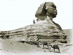 - La Esfinge . Meseta de Giza ./tcc/