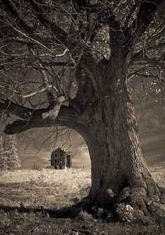 That would be an awesome cover for a horror novel!!