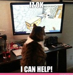 Minecraft Kitty lol maybe he can help me catch the chickens!
