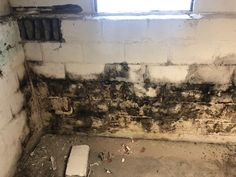 As a home inspector in Erie & Cattaraugus County in NY, I suggest that many homeowners and buyers have their houses tested for mold.    Mold testing will provide you with a lab analysis of air samples, which include the relative quantities and species of mold present in several locations inside of the structure.  This assessment will provide actionable information that will allow you to correct the problem.    Call us at 716-222-2586 to schedule your mold inspection. New York Homes, Assessment, Schedule, Buffalo, Lab, Houses, Timeline, Homes, Labs