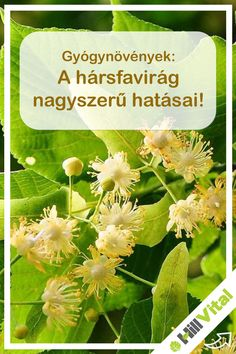 Herbs, Health, Plants, Health Care, Herb, Plant, Planets, Salud, Medicinal Plants