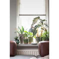 IT'S ABOUT ROMI Citylight Denver: desk lamp iron light grey with round cement base @ VT Wonen Indoor Plant Pots, Indoor Garden, Potted Plants, Inside Plants, Plants Are Friends, Office Plants, Industrial Living, Ficus, Home Design