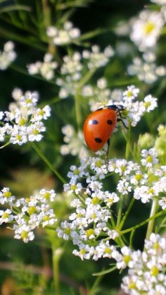 (via ladybird | A kitchen garden