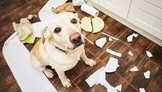 Improve Dog Behavior with Us Easily  Our company provides best solution to dog behavior at very reasonable cost. If your dog behavior is not so good to handle, we have some tricks for your dog.  http://www.dogownerconnection.com/dog-behavior-problems-aggressive-dogs-want-loved/