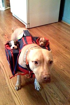 Dog with Saddlebags...comes with two sub woofers