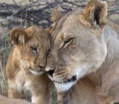 Fotos de animales para sonreír: el amor existe (FOTOS)