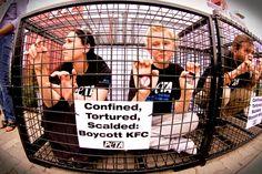 KFC boycott
