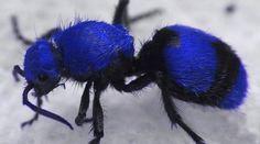 http://outandaboutnews.com/strangest-ants-planet/?utm_medium=cpc