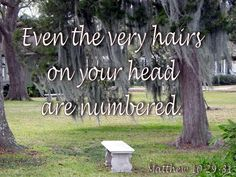 Even the very hairs on your head are numbered. Father's Love Letter, Matthew 10 29, World Leaders, In The Flesh, Satan, Fathers, Muslim, Christ