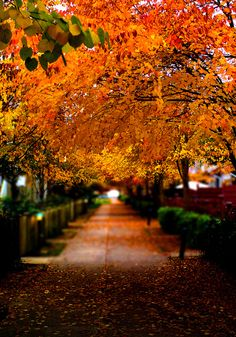 ~Autumn  in Vancouver BC (by Edwin_Chan)~