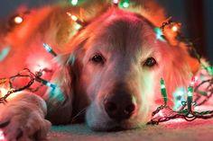 It's an Adorable Life: Fun Christmas Decorating Ideas