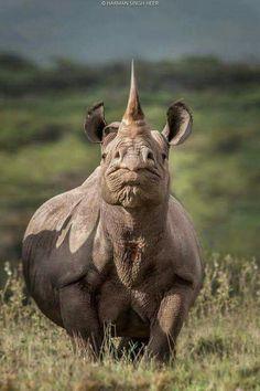 Kids Funny Chubby Unicorn T Shirt Rhinoceros Shirt Wildlife Conservation Rhino G