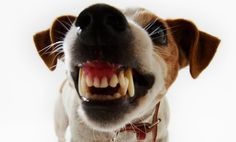 Are some dog breeds more aggressive than others?