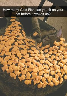 More Hilarious Cat Snapchats That Are Impawsible Not To Laugh At - 15 hilarious animals whod do anything for your food