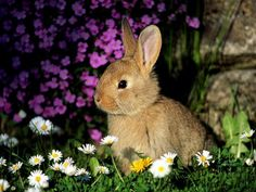 bunny by Sharp.Shooter, via Flickr
