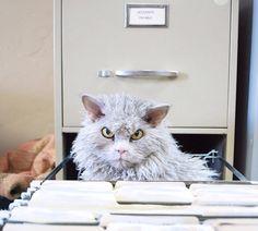 Rencontrez Albert, le chat royalement en colère