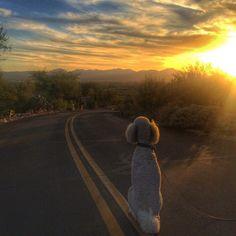 Monica Surfaro (@Tucson_Cowgirl) | Twitter