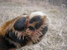 How to Make Wax for Dog Paws